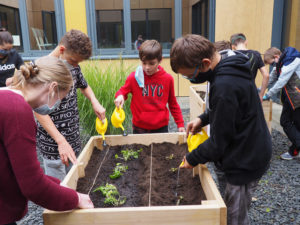 Ackerhelden machen Schule – Jetzt auch an der Sally-Perel-Gesamtschule!